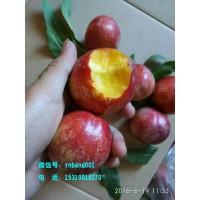 水果代理招聘 果园直发 一件代发